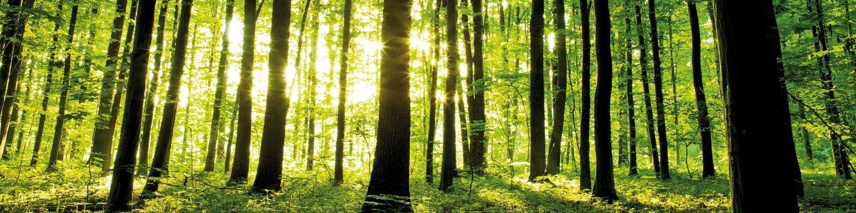 Nobilia-Dekor-Forest